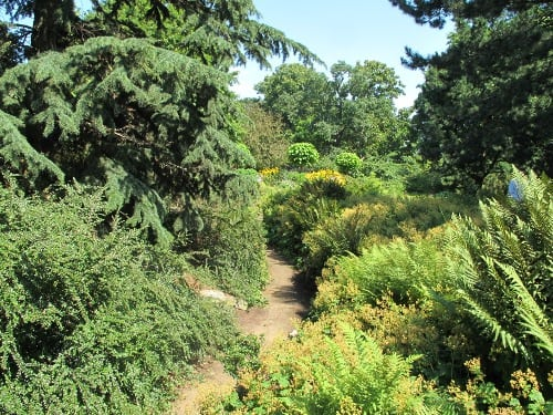 Path trough green