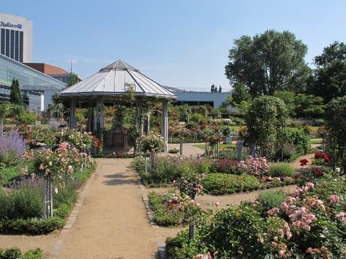 Building in the Rose garden